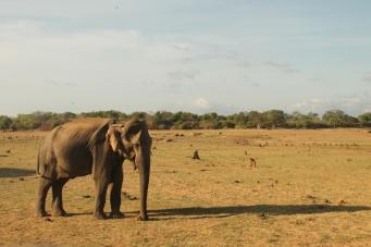 Park Narodowy Udawalawe, Sri Lanka