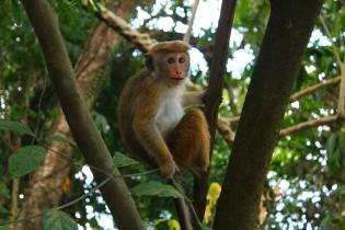 Największą według nas atrakcją w ogrodzie botanicznym sa małpy, można stać godzinami i się na nie gapić :D