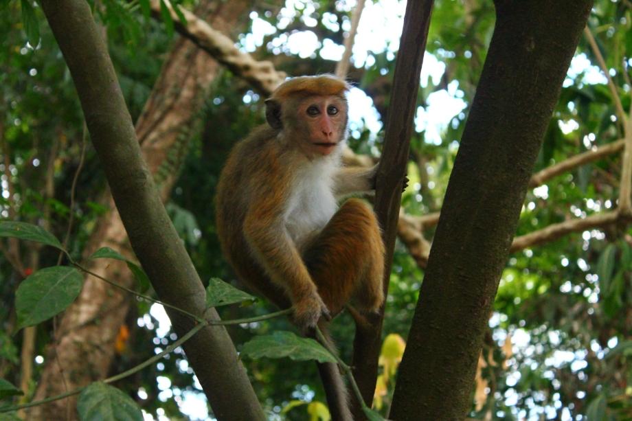 Królewski Ogród Botaniczny, Kandy Sri Lanka
